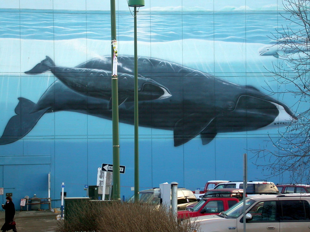 As big as the ocean creating murals polar oceans for Creating a mural