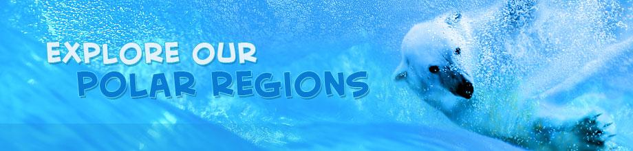 explore-polar-regions